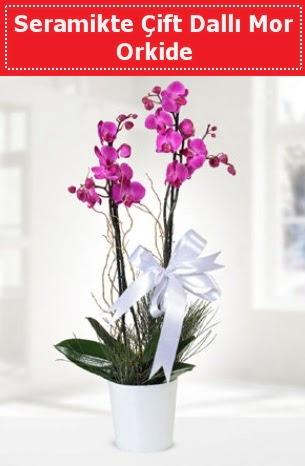 Seramikte Çift Dallı Mor Orkide  Bursa çiçek ucuz çiçek gönder