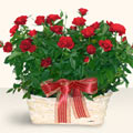 Bursa çiçek çiçekçi  11 adet kirmizi gül sepette
