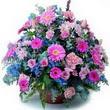 karisik mevsim kir çiçekleri  Bursa cicekci bursaya çiçek yolla