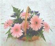 gerbera çiçeklerinde sepet   çiçek yolla bursa