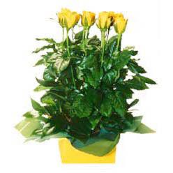 11 adet sari gül aranjmani  çiçekçiler bursa