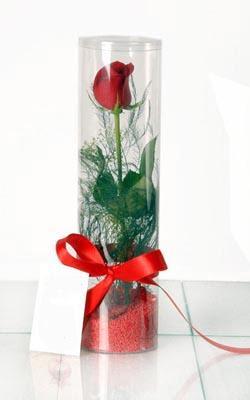 çiçek yolla bursa  Silindir vazoda tek kirmizi gül