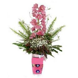 Çiçekçi Bursa  cam yada mika vazo içerisinde tek dal orkide çiçegi