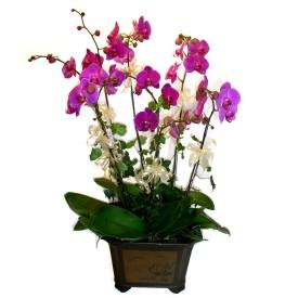 Bursa online çiçekçi  4 adet orkide çiçegi