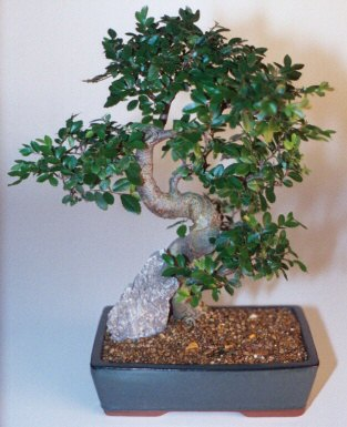 Bursa cicekci bursaya çiçek yolla  ithal bonsai saksi çiçegi  Bursa çiçekçisi hediye çiçek yolla