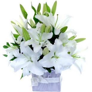 çiçek yolla bursa  2 dal cazablanca vazo çiçeği