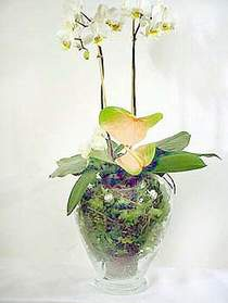 bursa çiçekçiler çiçek satışı  Cam yada mika vazoda özel orkideler