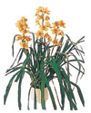 Bursa çiçek yolla çiçek , çiçekçi , çiçekçilik  Orchiede ithal büyük boy saksi