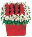 online bursa çiçek siparişi   Kare cam yada mika içinde kirmizi güller - anneler günü seçimi özel çiçek