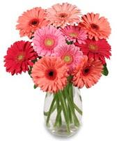 vazo içerisinde 13 adet gerbera çiçeği  Bursa çiçekçisi hediye çiçek yolla