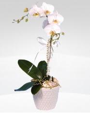 1 dallı orkide saksı çiçeği  çiçekçiler bursa