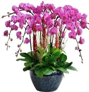 9 dallı mor orkide  Bursa çiçek gönder