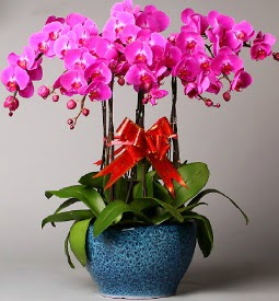 7 dallı mor orkide  Bursa çiçekçi telefonları cicek , cicekci