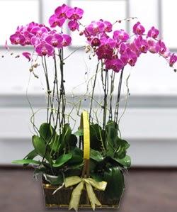 4 dallı mor orkide  Bursaya çiçek siparişi vermek