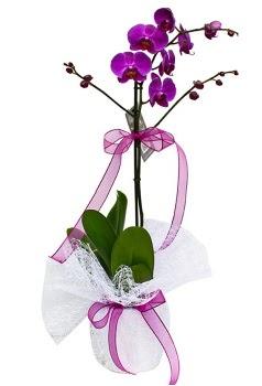 Tek dallı mor orkide  Bursaya çiçek yolla