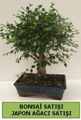 Minyatür bonsai japon ağacı satışı  Bursa cicekci bursaya çiçek yolla