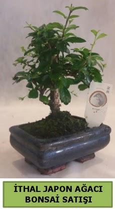 İthal japon ağacı bonsai bitkisi satışı  Bursaya çiçek yolla