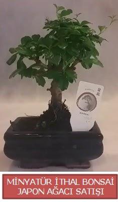 Küçük görsel bonsai japon ağacı bitkisi  Bursa çiçek gönderimi