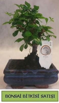 Bonsai ithal görsel minyatür japon ağacı  Bursadaki çiçekçi firmaları