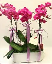 Beyaz seramik içerisinde 4 dallı orkide  Bursadaki çiçekçi firmaları