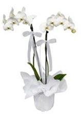 2 dallı beyaz orkide  Bursaya çiçek siparişi vermek