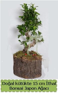 Doğal kütükte İthal bonsai japon ağacı  online bursa çiçek siparişi