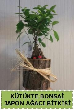 Kütük içerisinde doğal bonsai ağacı  Bursaya çiçek yolla