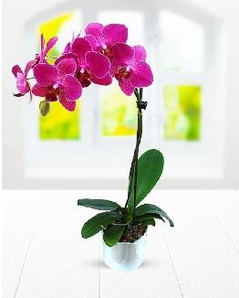 Tek dallı mor orkide  bursa çiçekçiler çiçek satışı