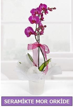 Seramik içerisinde birinci kalite tek dallı mor orkide  Bursa çiçek çiçekçi