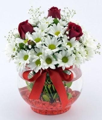 Fanusta 3 Gül ve Papatya  Bursadaki çiçekçiler