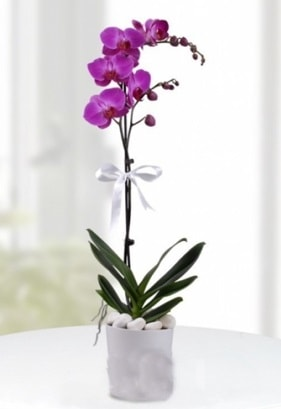 Tek dallı saksıda mor orkide çiçeği  Bursa çiçek yolla çiçek , çiçekçi , çiçekçilik