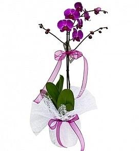 Tek dallı saksıda ithal mor orkide çiçeği  Bursa çiçek yolla çiçek , çiçekçi , çiçekçilik